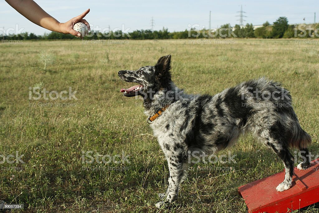 Sign without word for dog stock photo