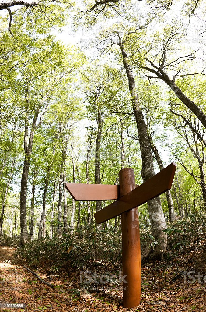 Signpost in the beech forest stock photo