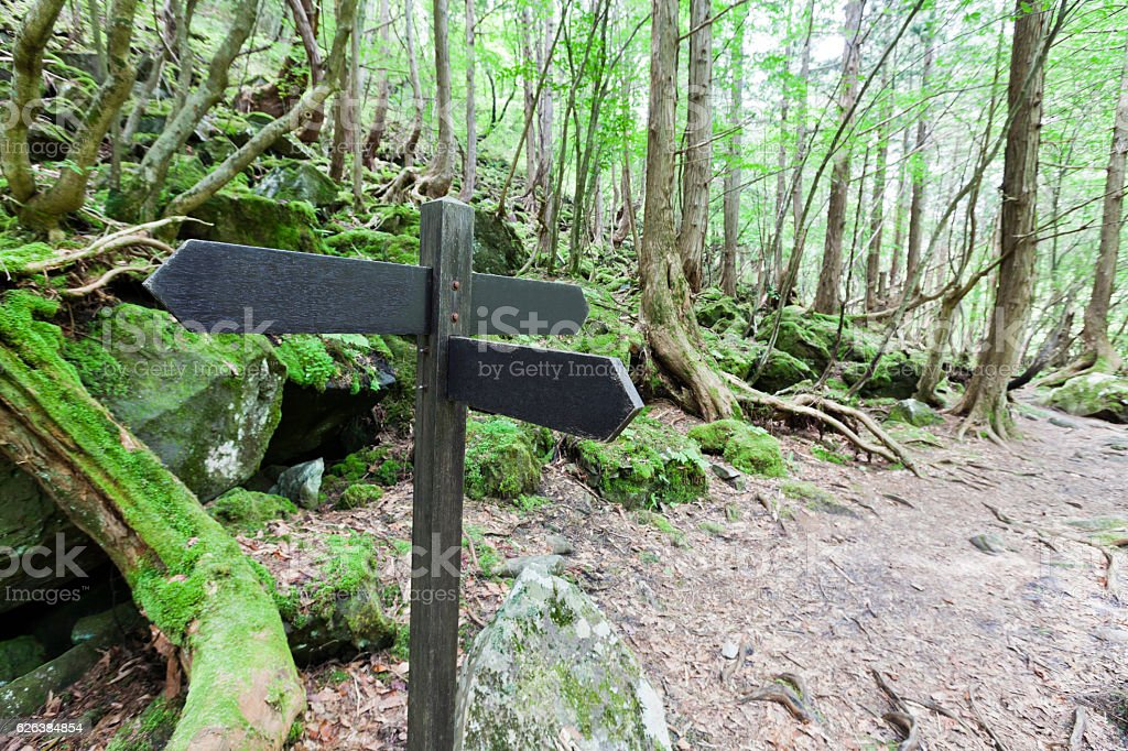 Signpost in the forest stock photo