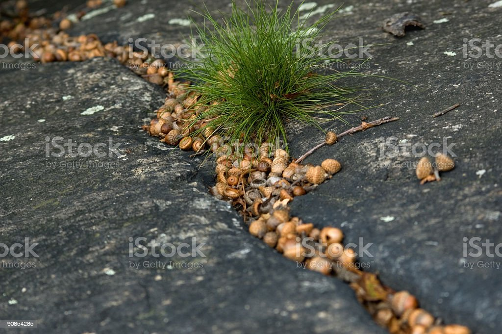 signs of fall stock photo