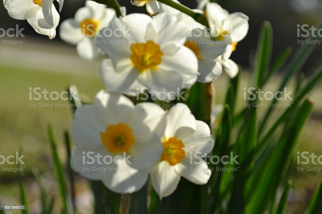 signs of spring stock photo
