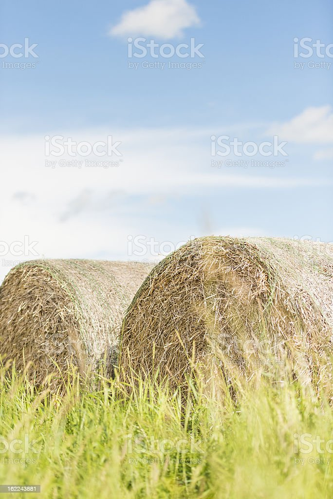 Silage bales in summer landscape royalty-free stock photo