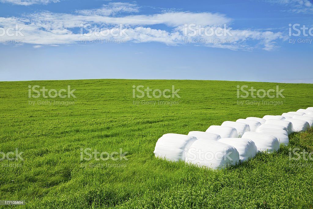 Silage bales on a field royalty-free stock photo