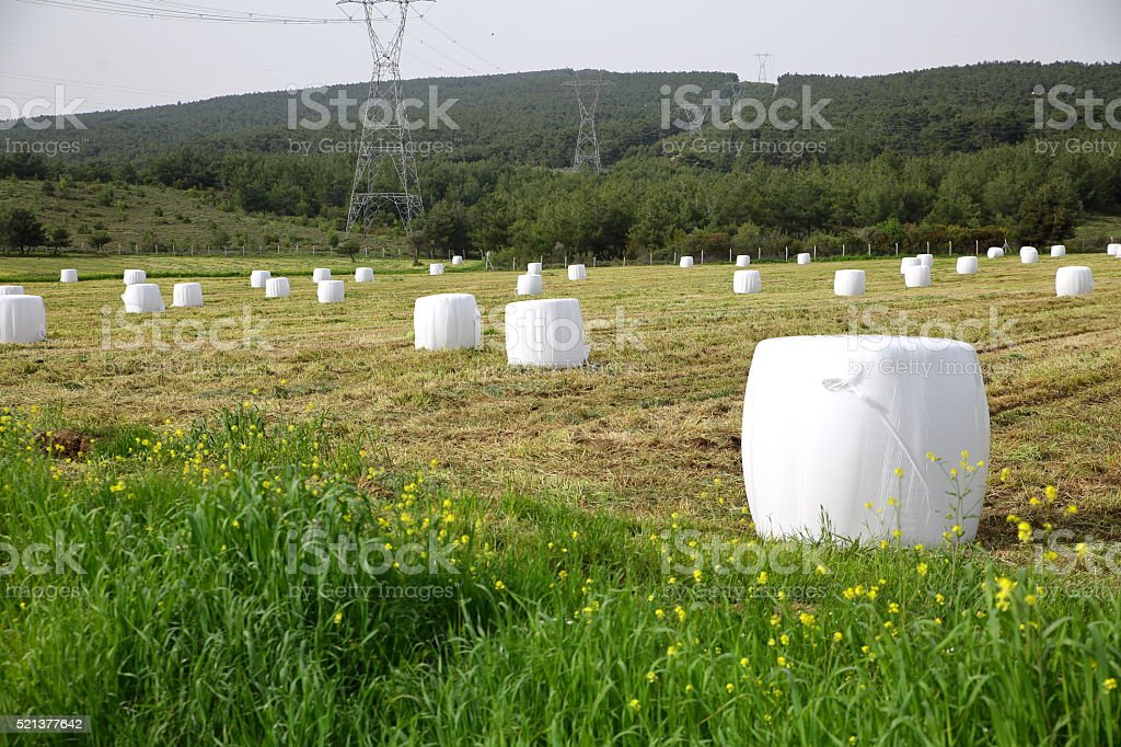 Silage bales stock photo