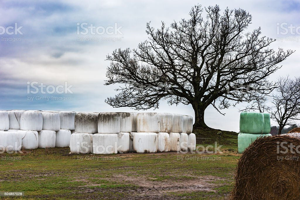 Silage bales under a tree stock photo