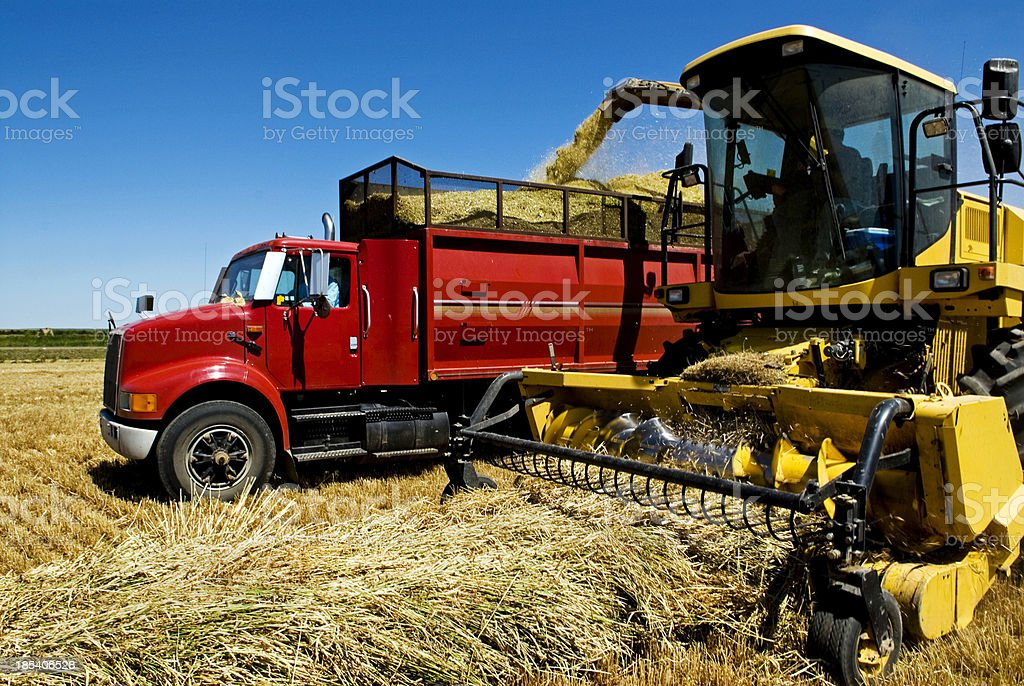 Silage in action stock photo
