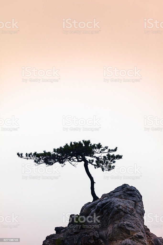 Silence - A Little Tree on a Little Rock stock photo