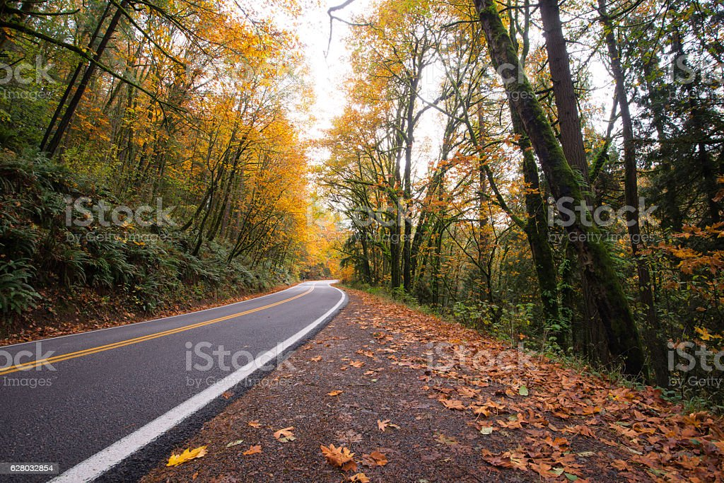 Silence of autumn forest with outgoing away road stock photo