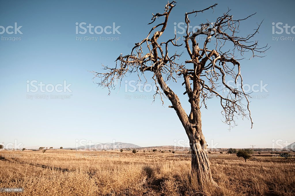 Silent Death royalty-free stock photo