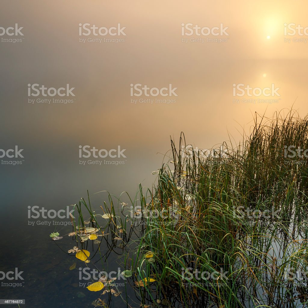 Silent lake misty morning sunrise stock photo