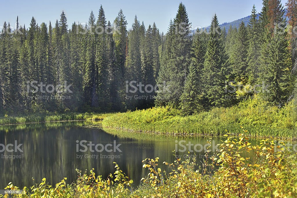 Silent lake. royalty-free stock photo