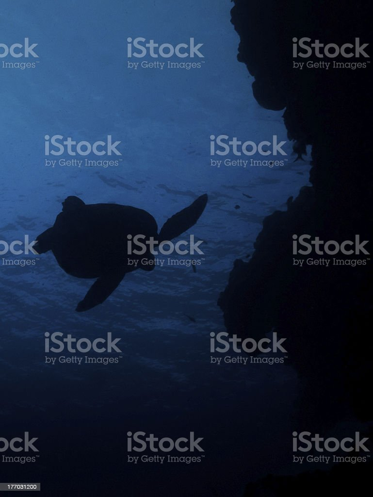 Silhoette of a Sea Turtle stock photo
