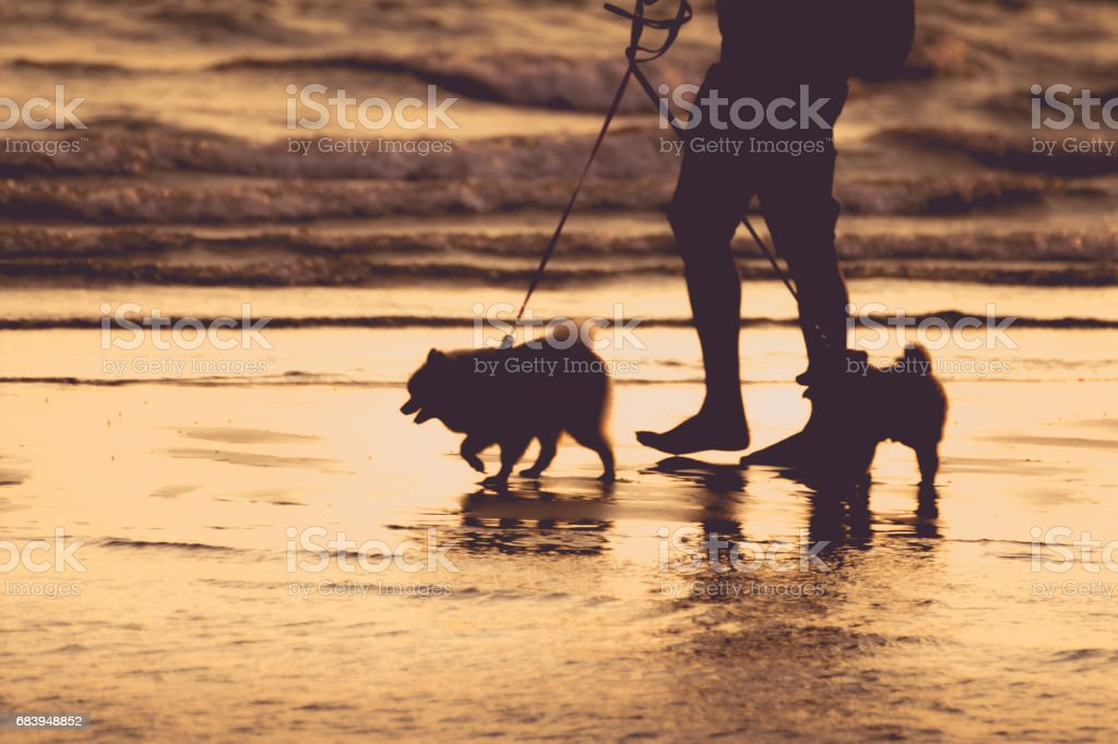 Silhouette, a man driving two dogs, walking on the beach in the evening, a concept of the holiday, relaxation, resting stock photo