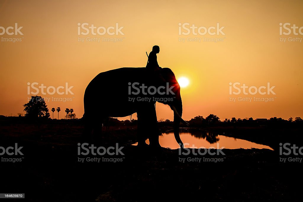 silhouette action of elephant in Ayutthaya province, thailand royalty-free stock photo