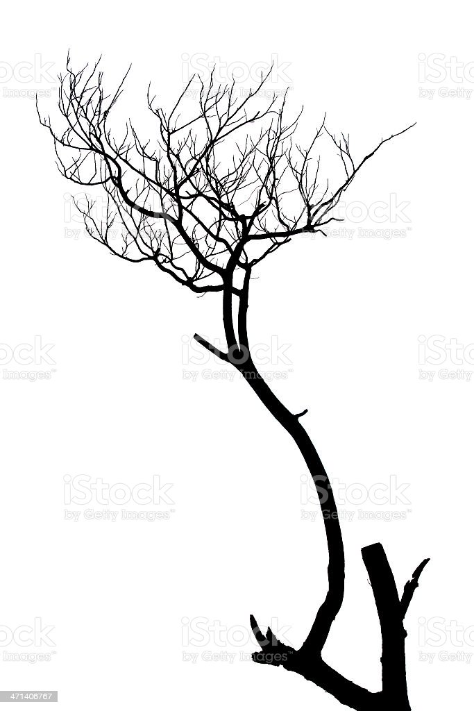 Silhouette art of a dead, leafless, tree branch stock photo