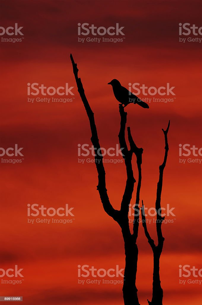 Silhouette at Sunset royalty-free stock photo