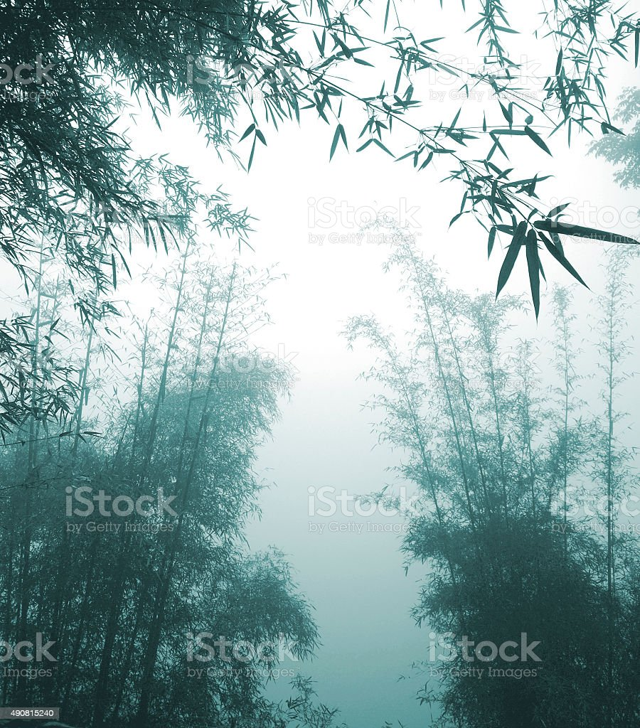 silhouette Bamboo Forest China Environment Concept stock photo