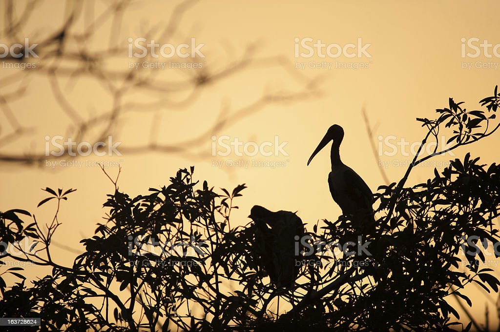 silhouette bird on branch after the sunset royalty-free stock photo