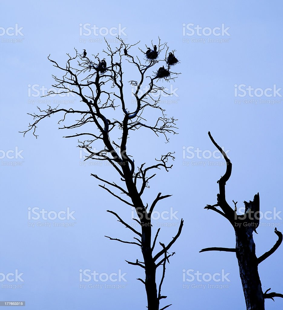 Silhouette birds and tree royalty-free stock photo