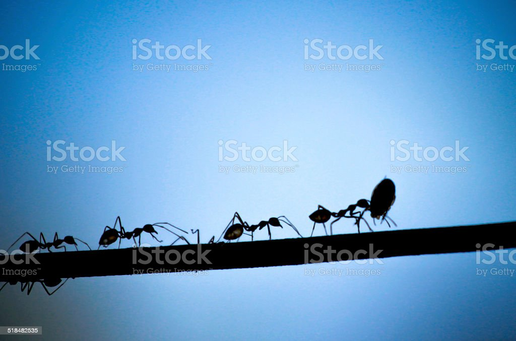 Silhouette black ant stock photo