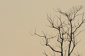 silhouette branch tree empty background