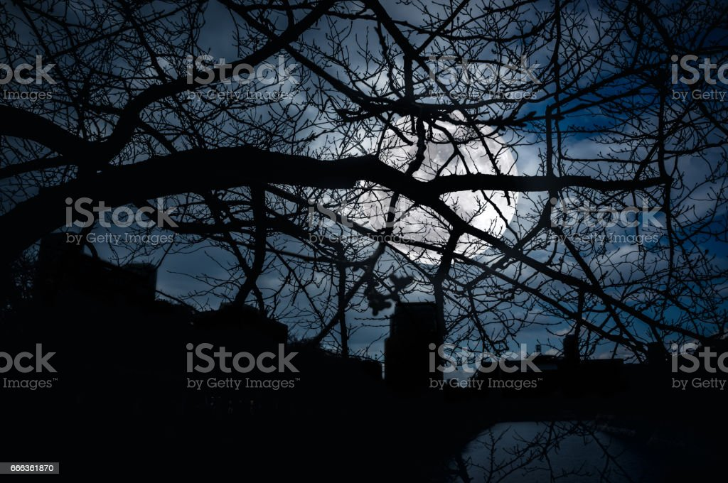 Silhouette branches of trees against night sky with full moon. stock photo