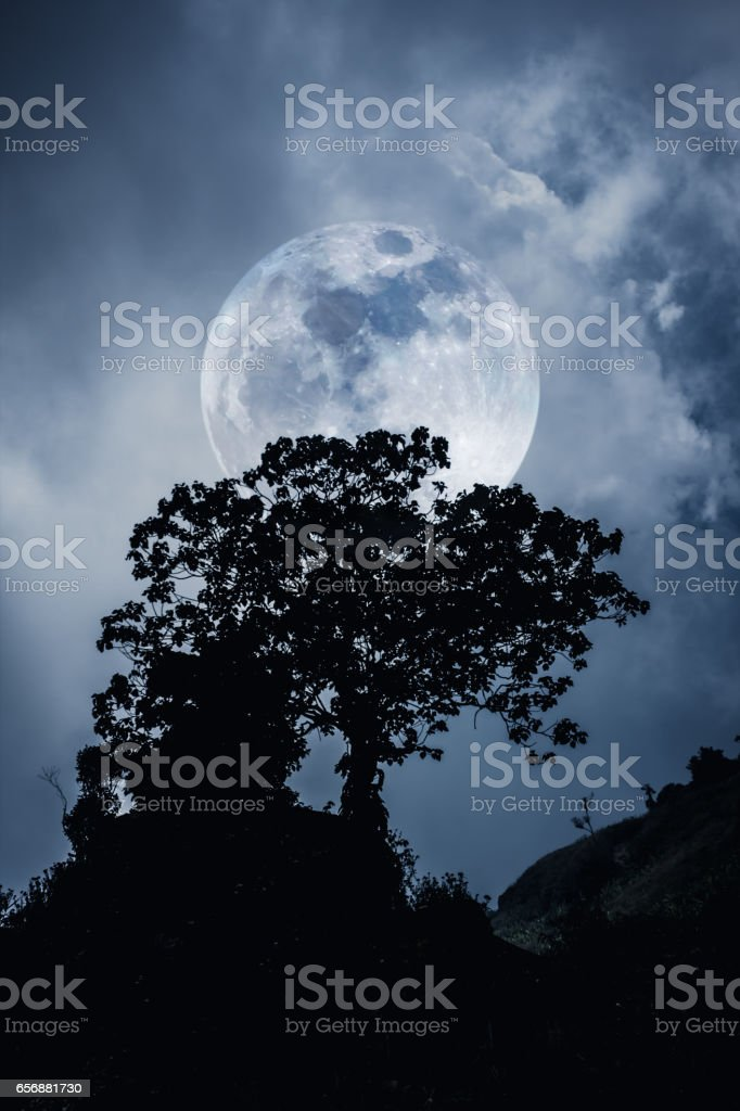 Silhouette branches of trees, night sky in full moon. Outdoors. stock photo