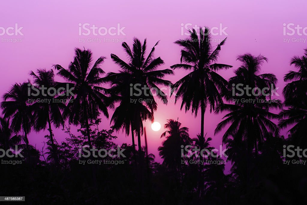 Silhouette coconut tree. stock photo