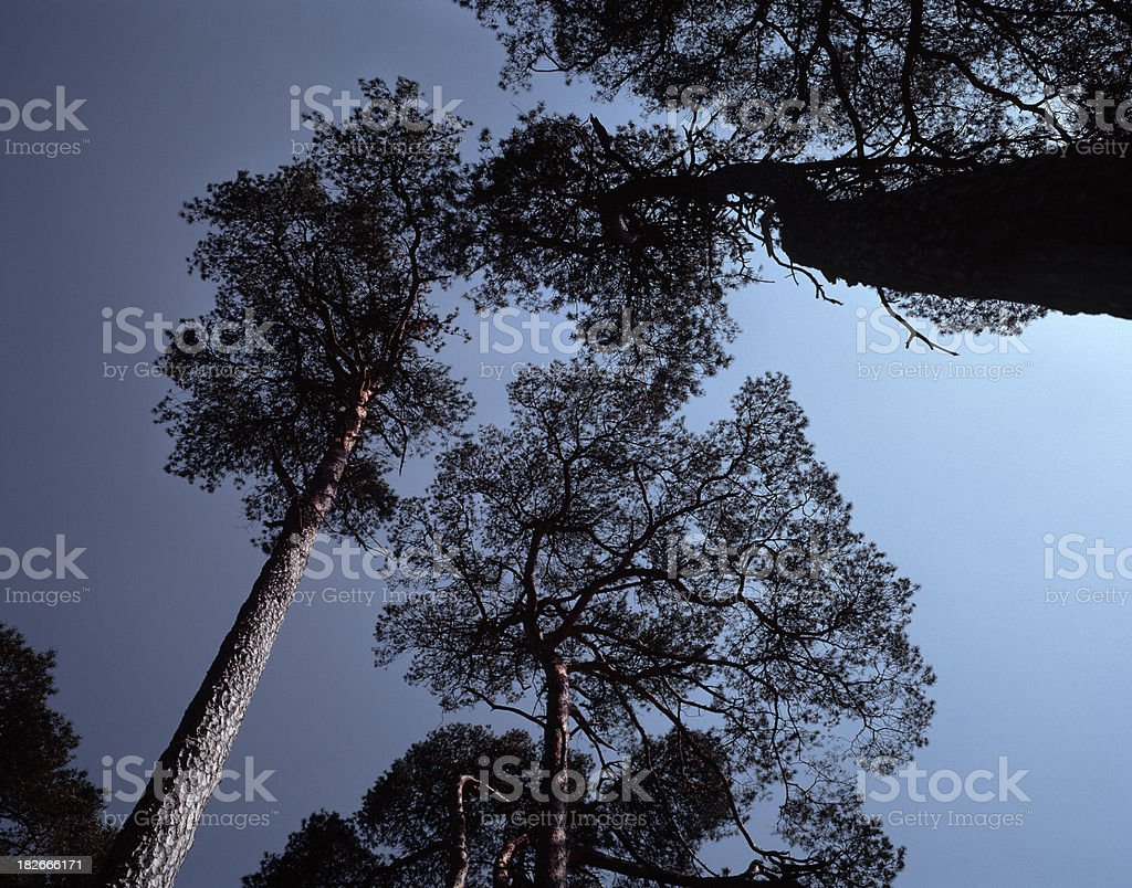 Silhouette composition of trees. stock photo