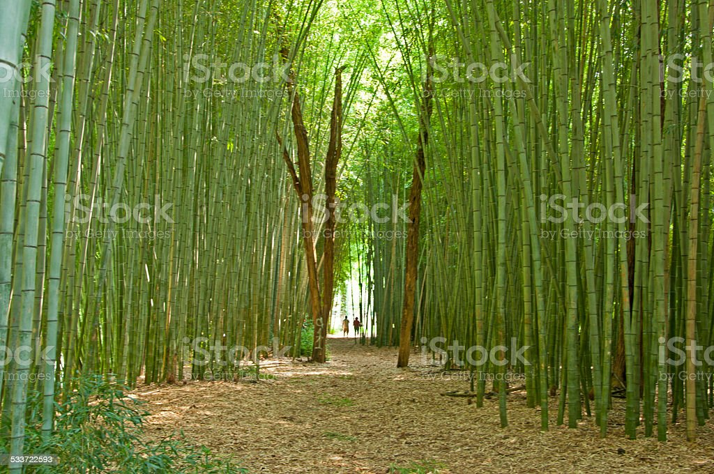 Silhouette couple ending with a tunnel through bamboo. stock photo