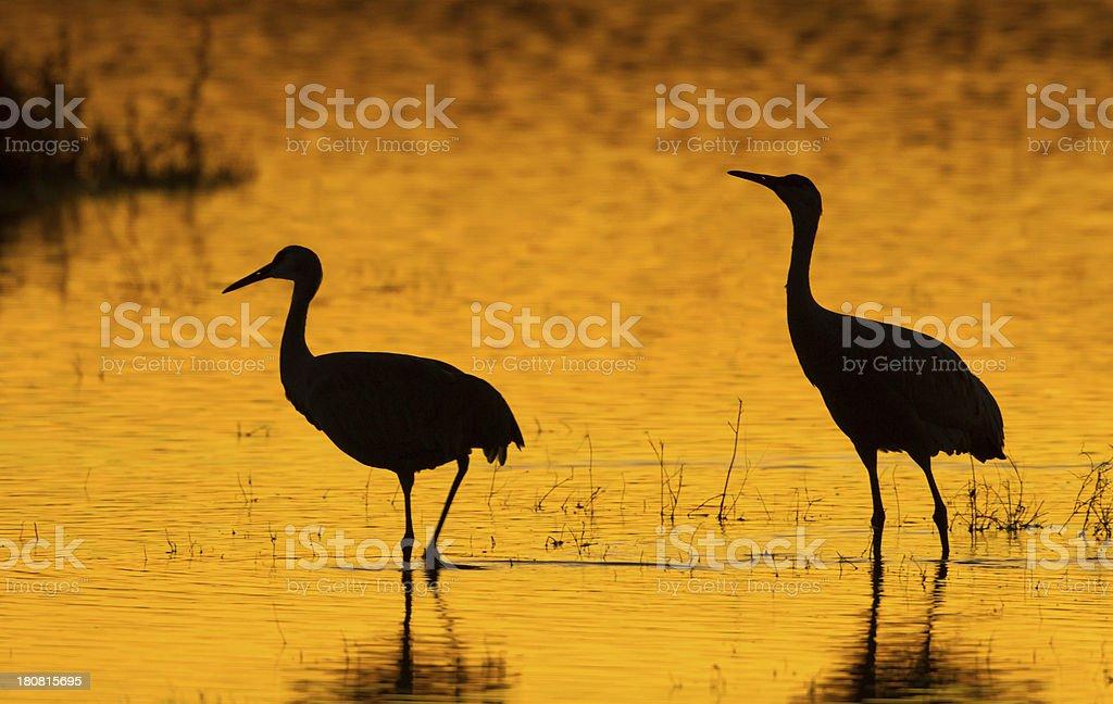 Silhouette Cranes royalty-free stock photo