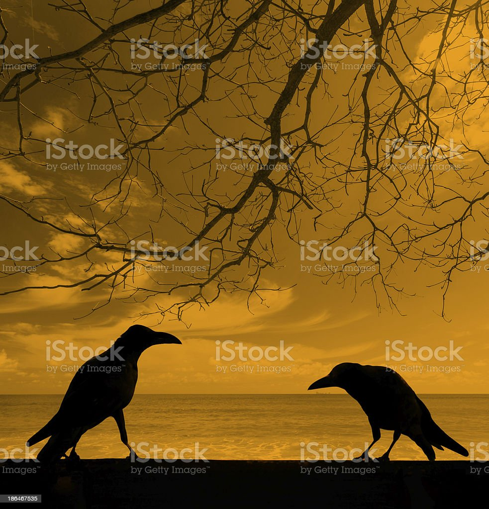 silhouette crows with dead tree background stock photo
