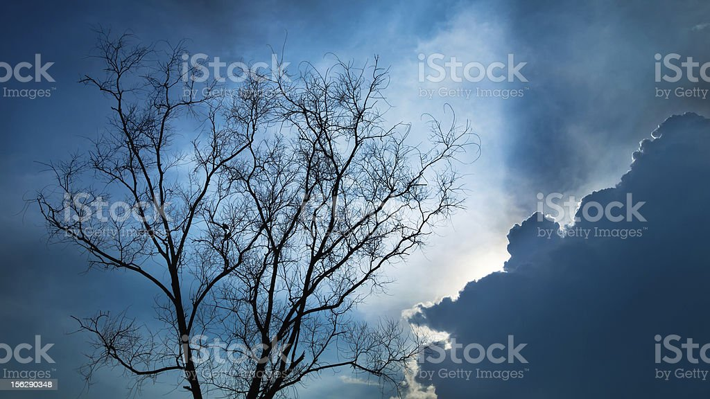 Silhouette Dry tree royalty-free stock photo