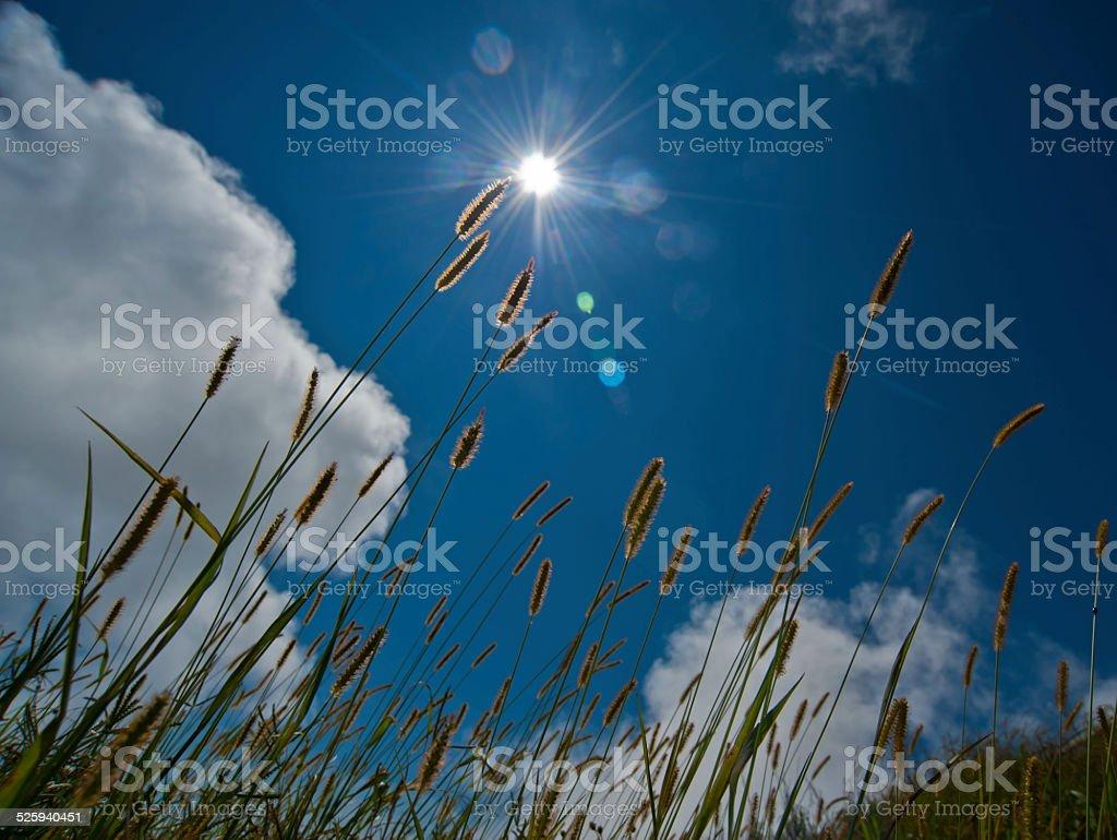 Sylwetka pole Trawa w rano w niebo jasne zbiór zdjęć royalty-free