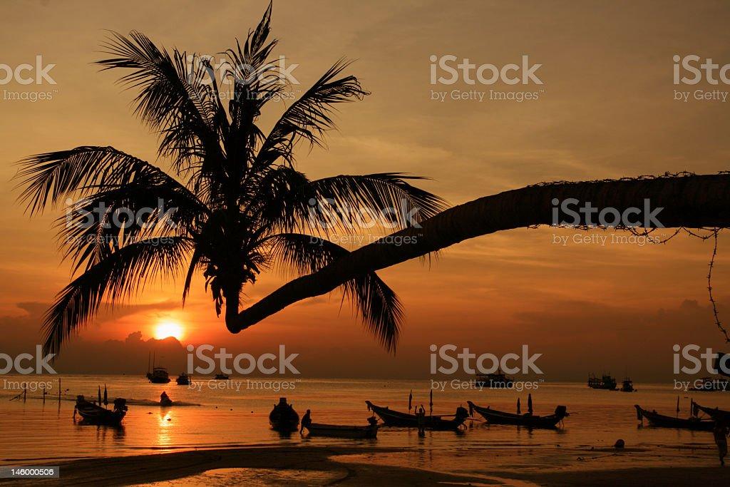 Silhouette Great Baech2 stock photo