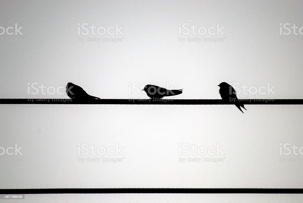 Silhouette of 3 swallows stock photo