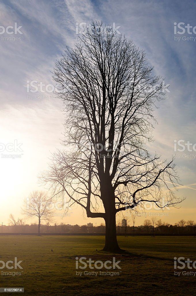 Silhouette of a bare tree and beautiful sky stock photo