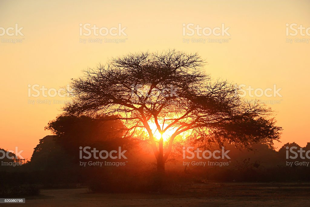 Silhouette of a big tree stock photo