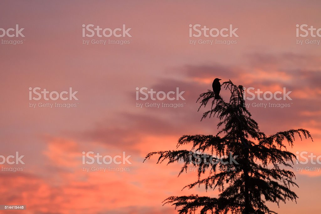 Silhouette of a bird stock photo