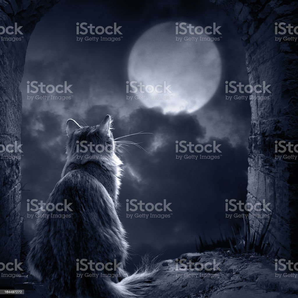 Silhouette of a cat in the moonlight stock photo