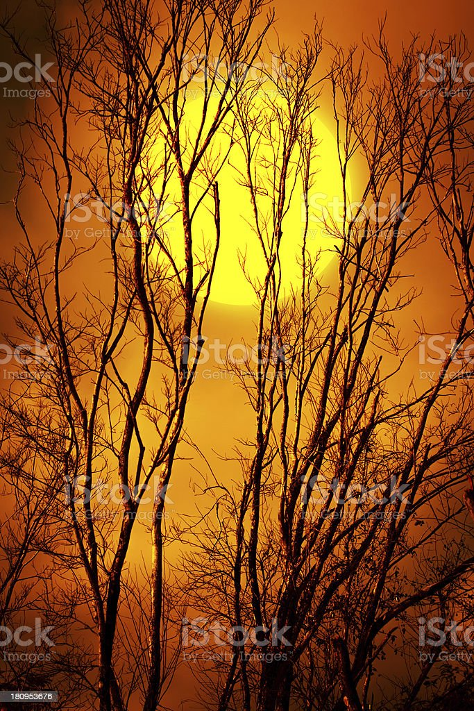 Silhouette of a dead tree with dark sky and  moon stock photo