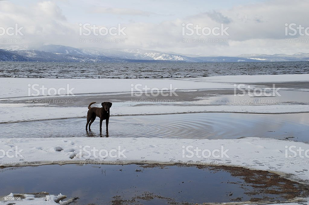 Silhouette of a Dog on Lake Tahoe royalty-free stock photo