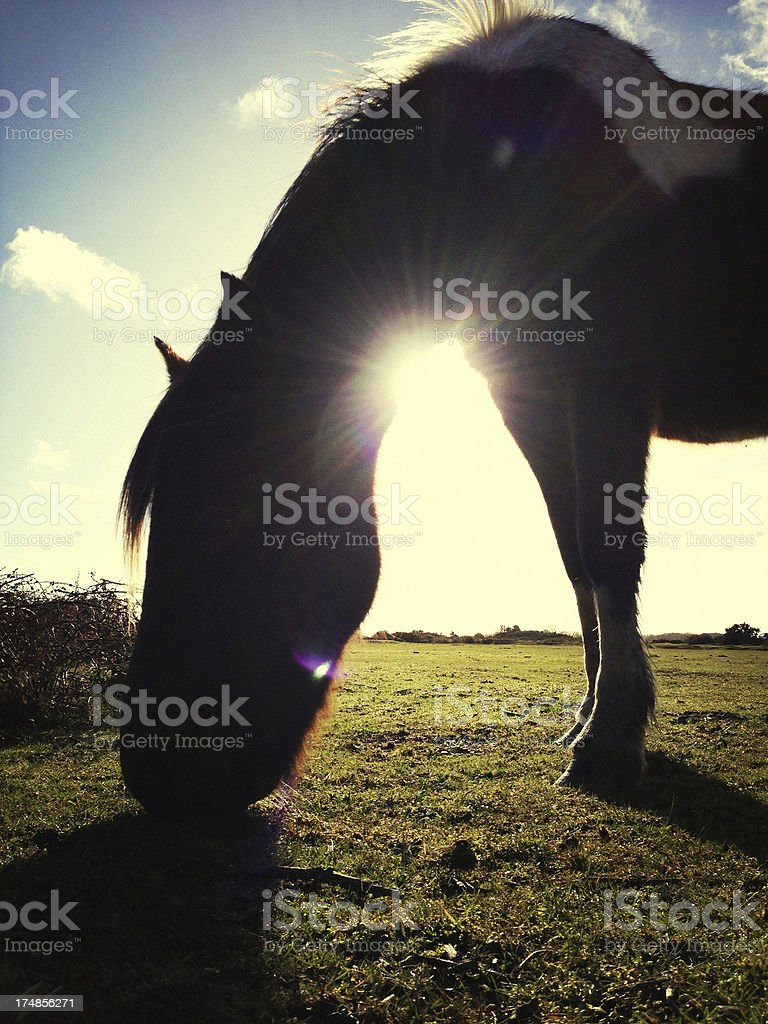 Silhouette of a horse grazing at The New Forest, England royalty-free stock photo
