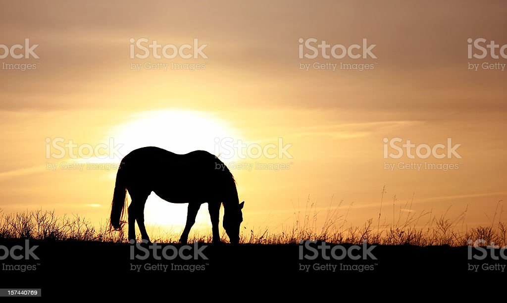 Silhouette of a Horse Grazing on a Pasture royalty-free stock photo