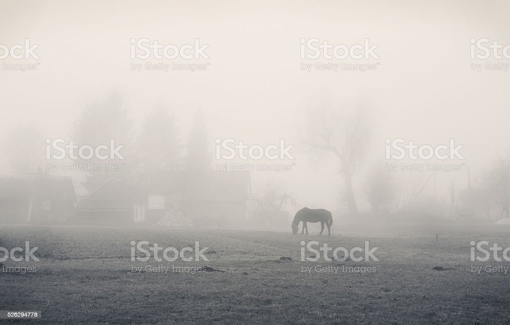 Silhouette of a horse in the fog stock photo