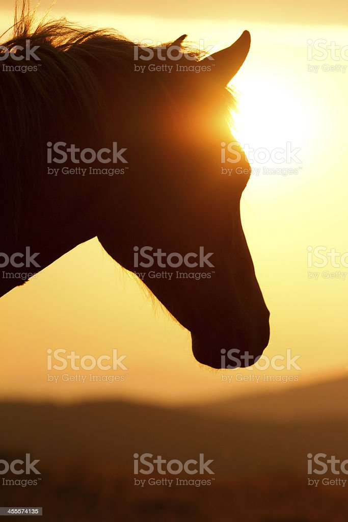 Silhouette of a horse's head against the sunset stock photo