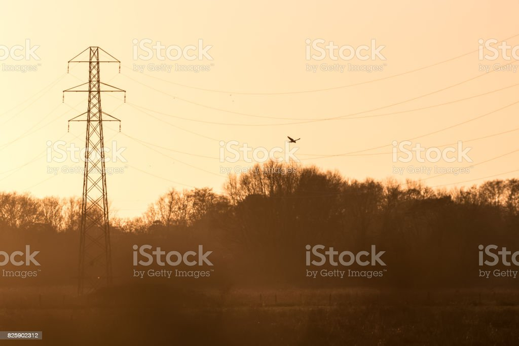 Silhouette of a Kestrel falcon raptor (Falco tinnunculus) hunting hovering over meadow at sunset with pylon and power wires or lines stock photo