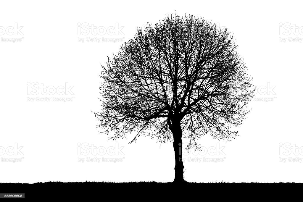 Silhouette of a lonely tree stock photo