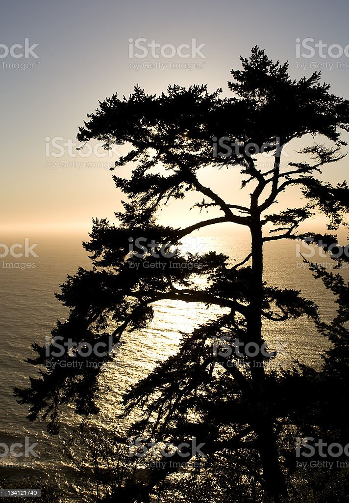 Silhouette of a pine overlooking the Pacific Ocean stock photo
