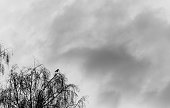 silhouette of a raven on top of the tree against